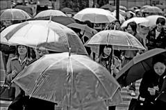 Japan Umbrellas (irre101) Tags: blackandwhite bw japan tokyo shinjuku shibuya crosswalk umbrellas tokyojapan shibuyaku aplusphoto