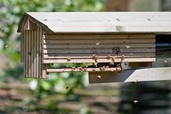 2009-06-23-14h45m12.IMG_2353l (A.J. Haverkamp) Tags: zoo rotterdam blijdorp bee bij dierentuin diergaardeblijdorp httpwwwdiergaardeblijdorpnl canonef300mmf4lisusmlens