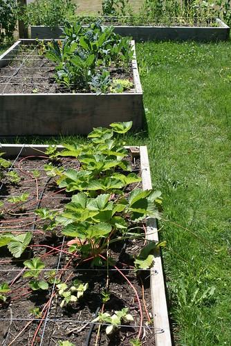 july 3 garden