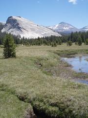 Yosemite (epilsk) Tags: yosemite tuolumnemeadows