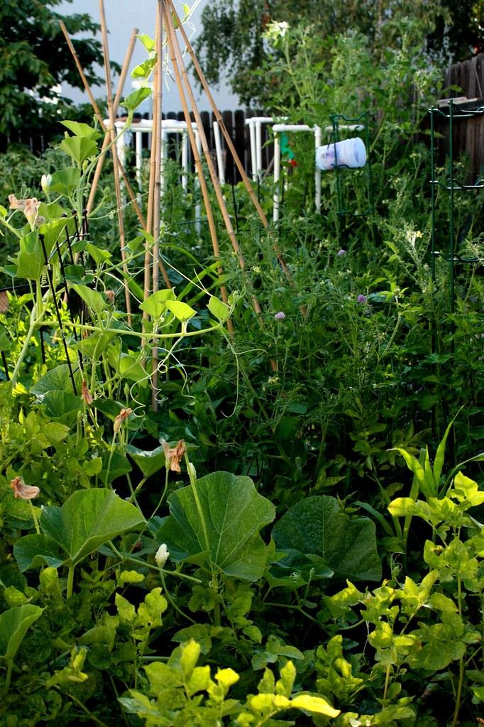 My jungle, my garden