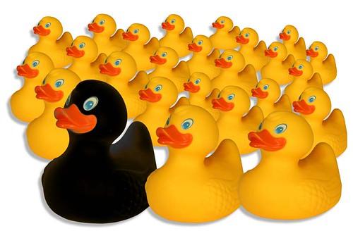 Ducks_3
