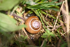 Snail (DianneB 2007.) Tags: flowers holiday macro closeup wales woodland farm insects 105 conwy hedgerow dib conwyvalley gadgetgirl sigma105mm canon40d tyddynmawr