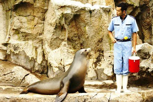 ocean park seals