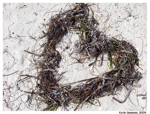 seaweed love