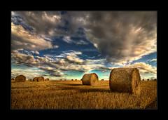 ... (*Niceshoot*) Tags: blue sunset sky field yellow clouds photoshop canon germany deutschland eos dresden corn cornfield saxony sunday feld himmel wolken tokina gelb sachsen blau 1224mm sonntag hdr korn stroh sunnyday acker kornfeld photomatix tokina1224mm bej 450d canoneos450d passiondclic