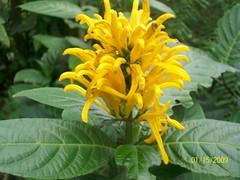 Inbio Parque (jerold.orcutt) Tags: costarica heredia