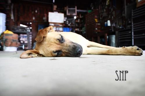 . sleepy greta .