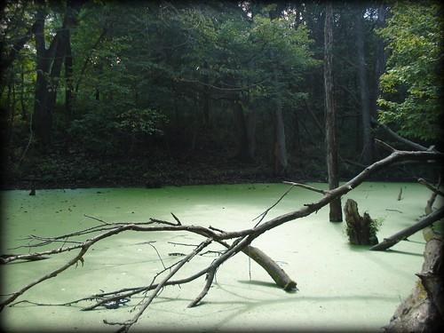 springbrook lagoon