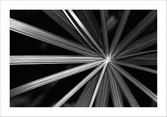 black & white (Toni_V) Tags: bw abstract nature zoo blackwhite zurich r1 zürich 2009 d300 zooh masoalahalle sbr200 toniv ringblitz dsc2276