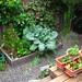 snapshots of tracy seeley's beautiful and bountiful backyard garden in oakland