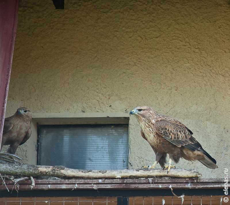 birds park-99