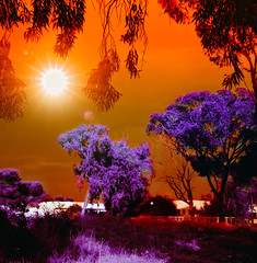 The enchanted garden (Mouin.M) Tags: desktop pink trees red wallpaper sky orange sun snow hot cold colors grass leaves wall clouds garden ir gold leaf google search cool track view purple shot dream free divine help heat download mysterious infrared eden rays beams bookmark heavan branchs