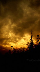 War Of The Fire  (yusuf_alioglu) Tags: world wood trees shadow red sky orange cloud black color colour tree bird colors grass yellow pine clouds forest turkey fire photography photo war flickr colours peace photographer earth awesome panasonic planet leafs 2008 amateur 2009 globalwarming brushwood darkforest gkyz planetearth dnya globalwarning planetworld abigfave globalchange globalwarner yusufyusuf85 picasa3 panasonicdmcls80 yusufaliolu yusufalioglu tokatcity warofthefire closedsky unbornart yusufaliogluphotography weloveyoutom imissyoutom