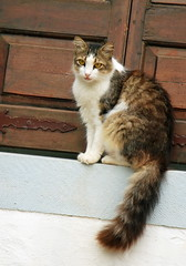 Cat portrait (Marite2007) Tags: portrait cats pets beautiful architecture cat outdoors pretty tail