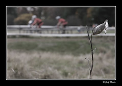 'Cross the field (geoffmart65) Tags: bicycle race canon eos cycling pod dof cross bokeh seed cx racing cyclocross 40d