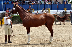 Awarded 33 (Virues de Segovia) Tags: espaa horse caballo cheval spain espanha feria fair andalucia espagne cavallo cavalo pferd jerez