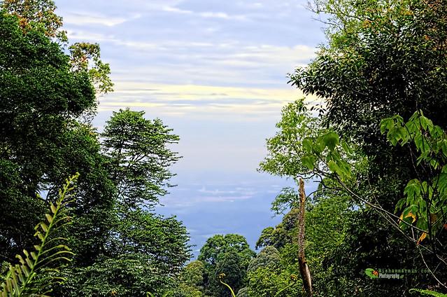 Explorasi ke Gunung Telapak Burok 2