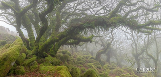 Misty wistmans