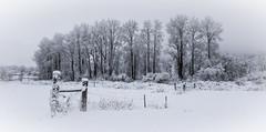Winter 8398 (Del Hoffman-Thx 18,180,000 Views) Tags: d810 digitalart winter fence snow february