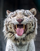 Like a Gene Simmons (Belteshazzar (AKA Harimau Kayu)) Tags: rocky kara tiger zoo animal bigcat bigcats feline bengaltiger pantheratigristigris königstiger indischertiger eltigredebengala tigredubengale latigrerealedelbengala бенгальскийтигр 孟加拉虎 whitetiger weisertiger tigreblanco tigreblancroyal белыйтигр 孟加拉白虎 zooshot tobu tobuzoo snowwhite sunbathing canada playful playfulcat playfultiger playfulwhitetiger bengal genesimmons rockstar