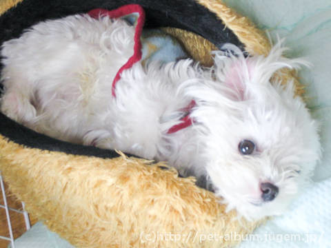 ミル(犬)の写真3