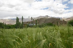 (studiobindia) Tags: mountains trekking landscape drive getaway buddhism adventure monastery valley zanskar geography leh himalayas jaya ladakh alchi balbir lamayuru studiob studiobindia jayakanwar patharsahib balbirsinghdasila