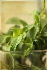 Refreshing ({as}photography) Tags: green mint gorgeousgreenthursday texturebylesbrumes beamsofbeauty