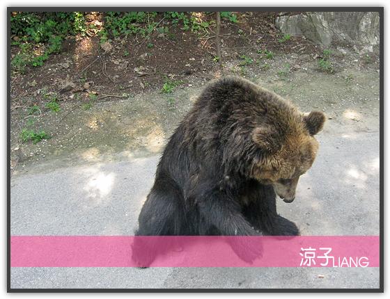 愛寶樂園(動物篇)12