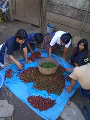 The coffee making process