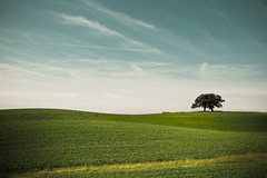 The Next Hill (Loren Zemlicka) Tags: blue trees summer two sky green nature field june wisconsin clouds rural canon landscape photography photo berry midwest image farm horizon country hill grow picture hills crop land 5d minimalism distance 2009 minimalist slope rolling oaktrees crossplains blackearth canoneos5d flickrexplore lorenzemlicka