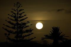 Entre la araucaria y la palmera....l (El Loco de Smara) Tags: lanzarote puestadesol ocaso puertodelcarmen losfariones