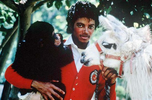 Michael Jackson Bubbles photo