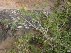 No hagan lea del rbol cado, este rbol esta descansando (andaluza catalana) Tags: helecho paisaje bosque rbol catalunya montaa descanso dorado tierra lleida piedra lea lerida almenara hojasverdes lurgell colordorado