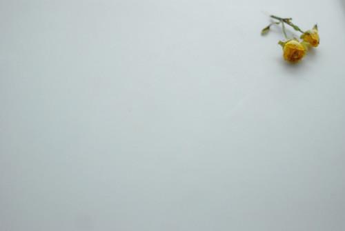 wrose