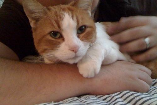 pipper's hug