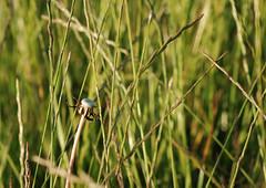 Loneliness (Konrad Iber) Tags: green nature nikon loneliness d80 kondi2111