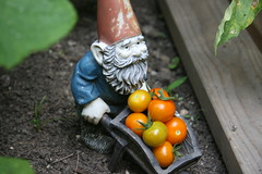 gnome with tomatoes