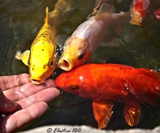 Los peces,