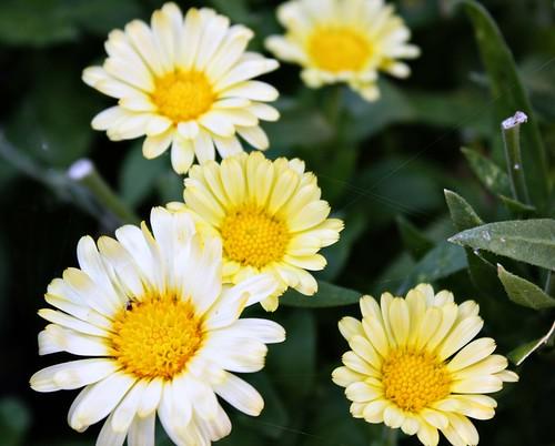 smflowers109