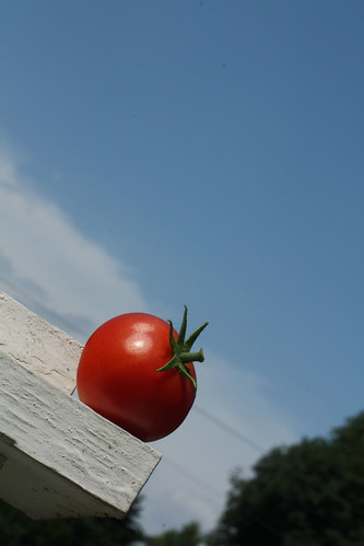 Epic Shot Cherry Tomato
