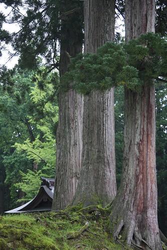 杉木立に眠る社
