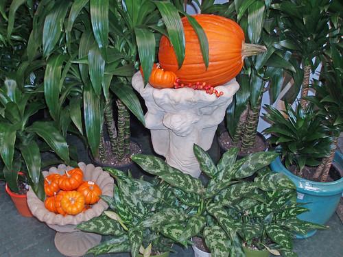 indoor plants, pumpkins