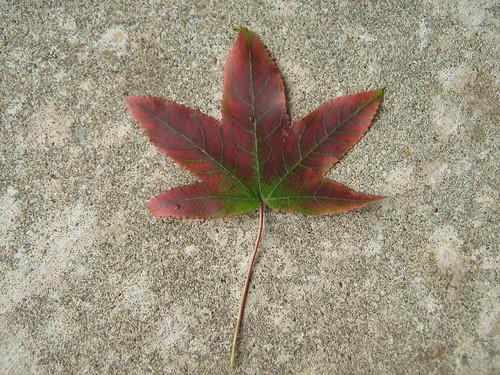 Amberboom (algemeen)