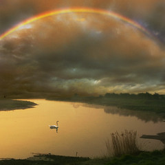 The beauty of nature (adrians_art) Tags: sky cloud reflection water birds swan rainbow rivers yourwonderland
