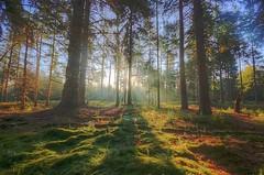 Peeking out (Stu Meech) Tags: park new trees mist forest sunrise moss haze nikon long shadows stu floor sigma national bracken 1020mm hdr lightbeams the meech d40