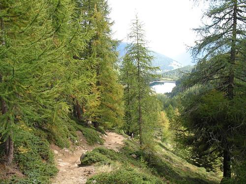 Blick durch den herbstlichen Lärchenwald auf den Stausse Weissbrunn