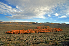 Aspen Grove Colours (Bob Palin) Tags: autumn trees 15fav usa fall utah fallcolor aspen seviercounty potofgold autumncolour 100vistas instantfave ut72 orig:file=2009092916410 nopin