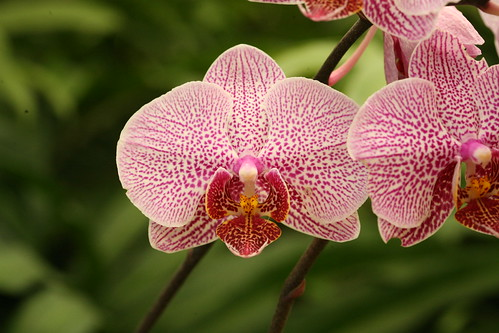 Types of Orchids | Everything Orchids