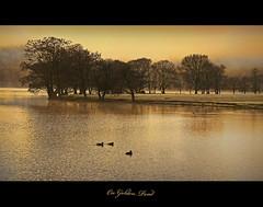 On Golden Pond (kenny shields) Tags: trees winter water golden scotland pond nikon scenic ducks loch d300 lochard goldenpond